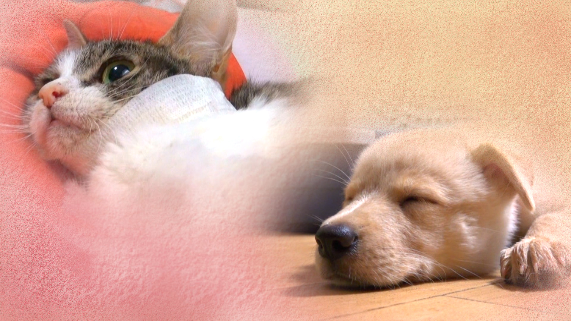 ねこ育て いぬ育て▽わんぱく犬に家族が傷だらけ▽子猫・命の記録▽SNS人気猫